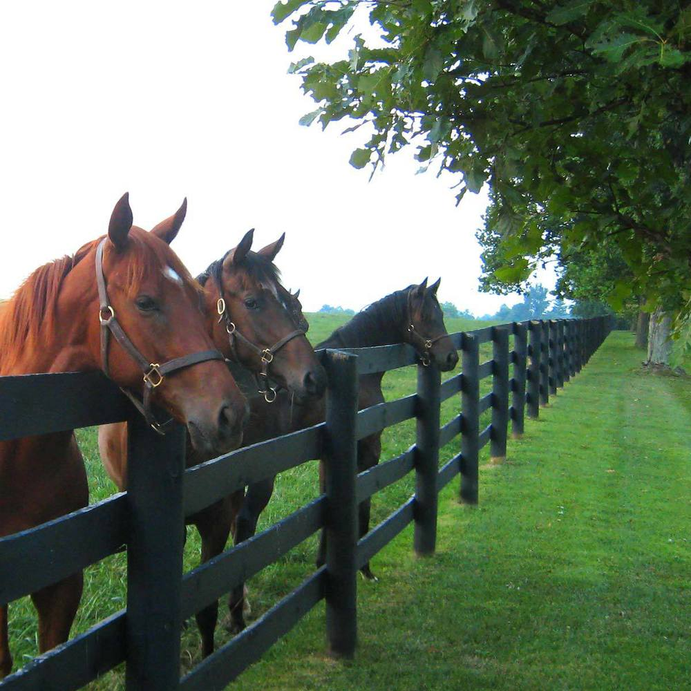horses-at-fence2.jpg