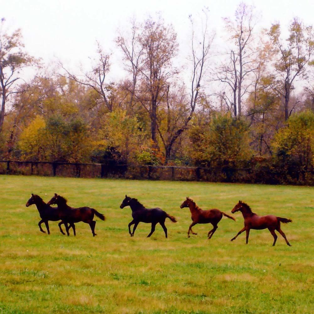 horses-galloping.jpg