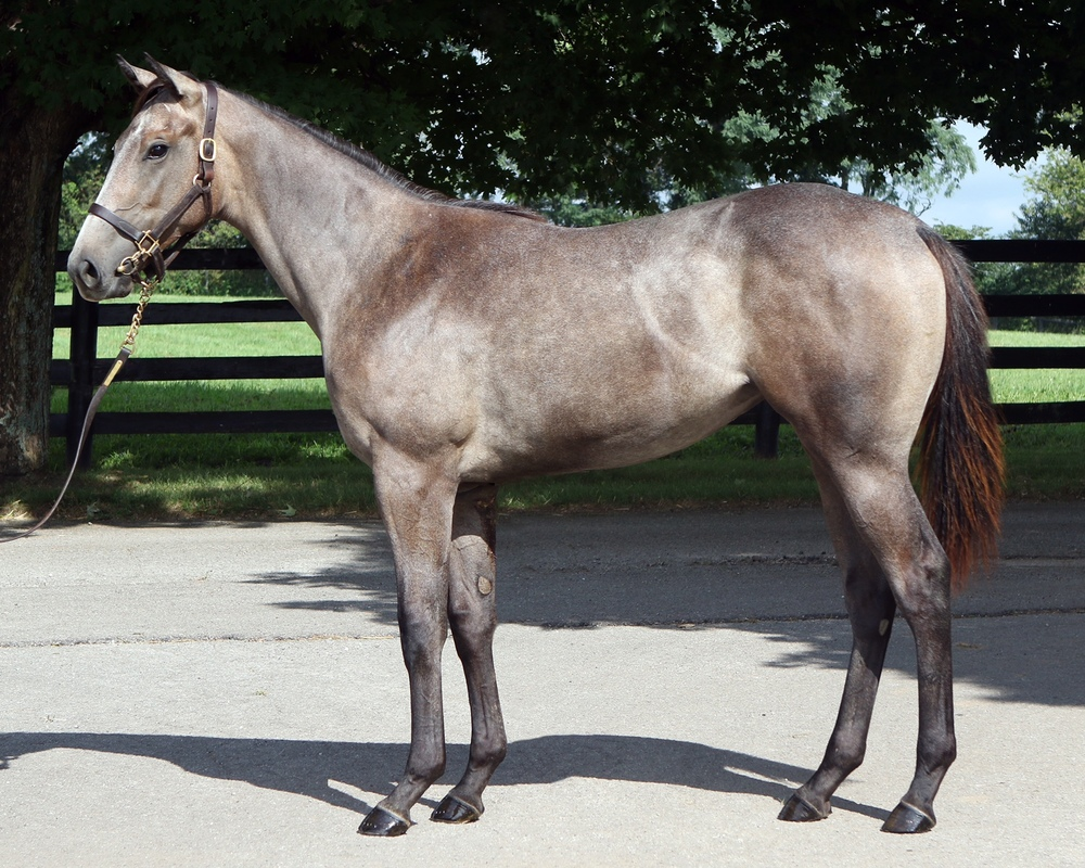 '14 Mary Ellise/Unbridled's Song F. <b>SOLD FOR $360,000</b>