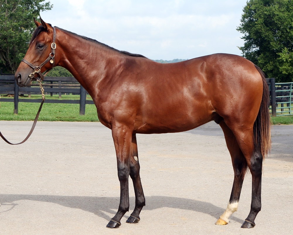 '14 Cuaba/Medaglia d'Oro C. <b>SOLD FOR $185,000</b>