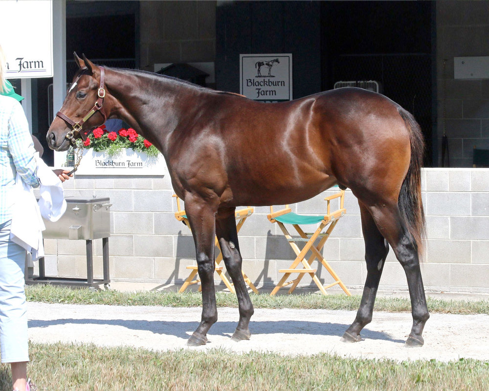 '14 Belleofthebridle/Ghostzapper C. <b>SOLD FOR $150,000</b>