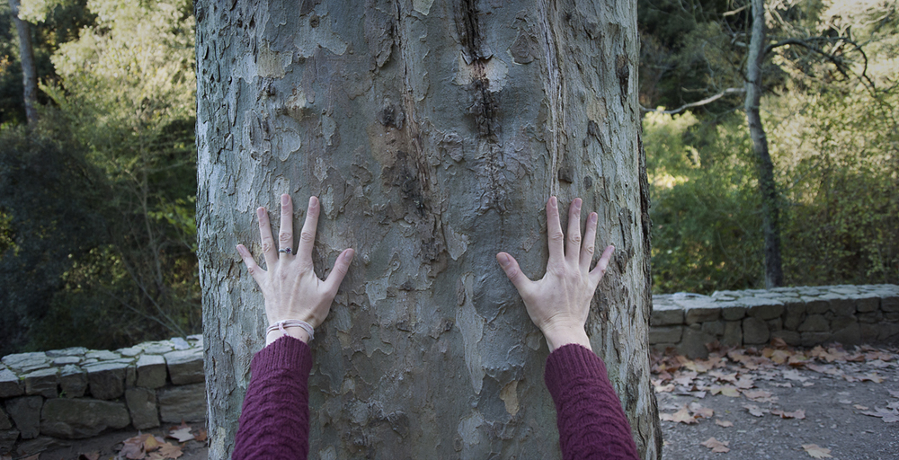 hands_tree.jpg