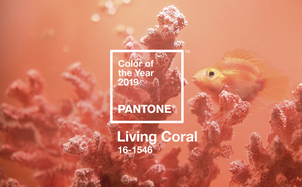 pantone-color-of-the-year-2019-is-living-coral.jpg