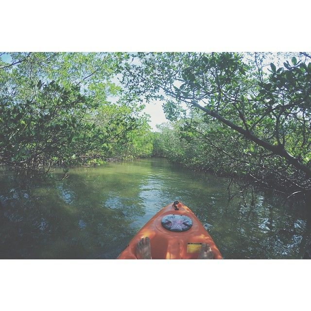 Kayaking through the Mangroves is a very chill experience.