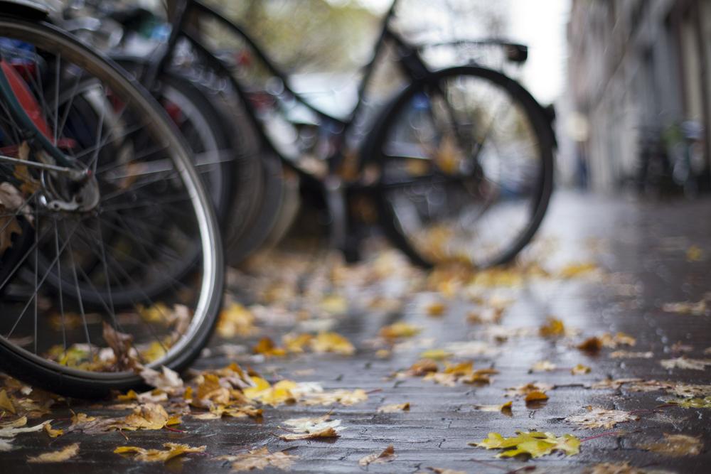 bikeleaves.jpg