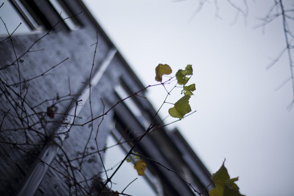 leafbuilding.jpg