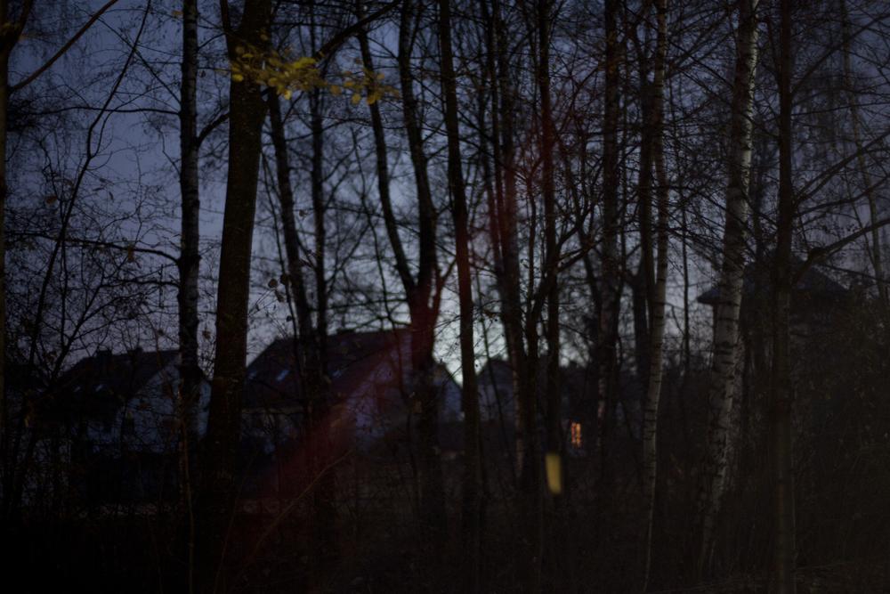 nighttreesroofs.jpg