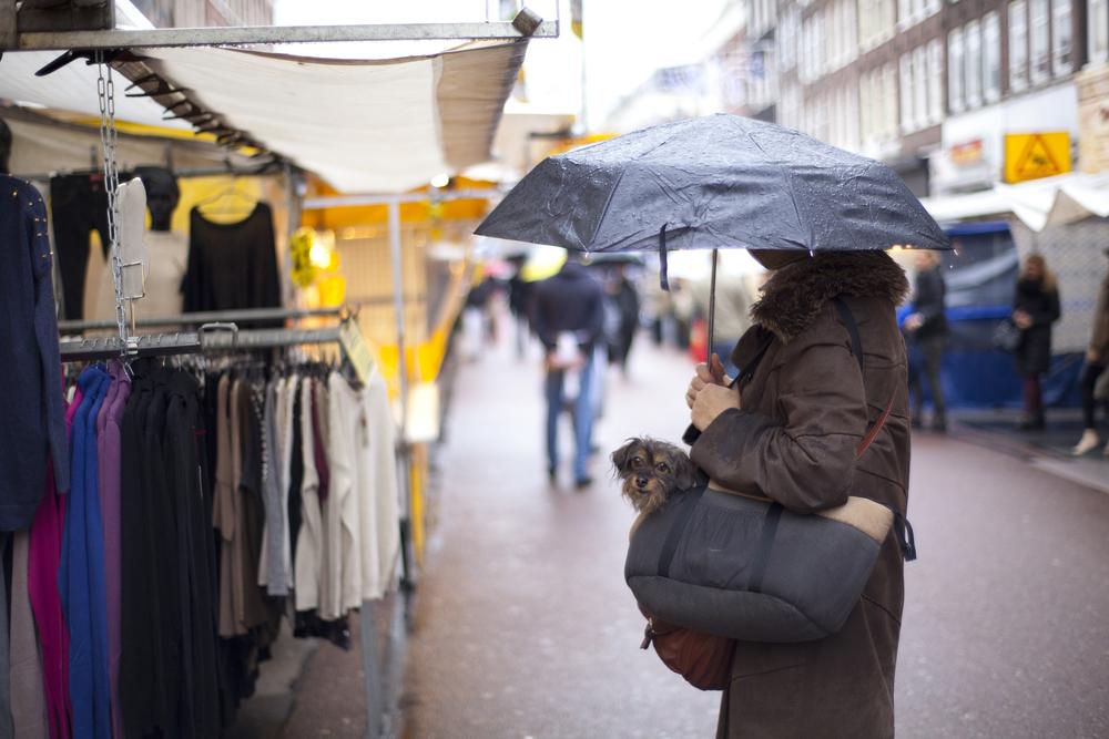 umbrelladog.jpg