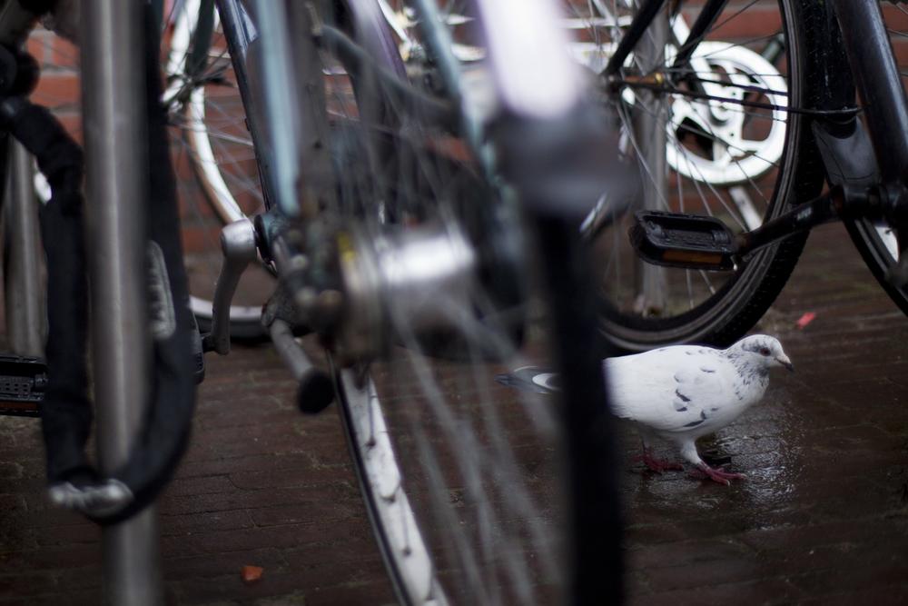 bikespigeon.jpg