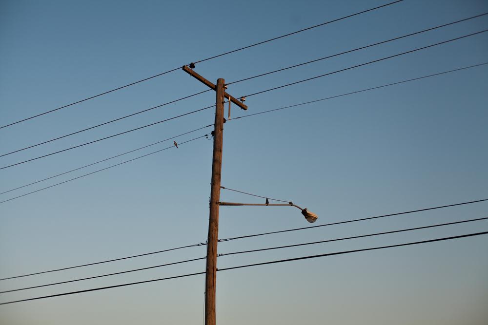 birdwire2.jpg