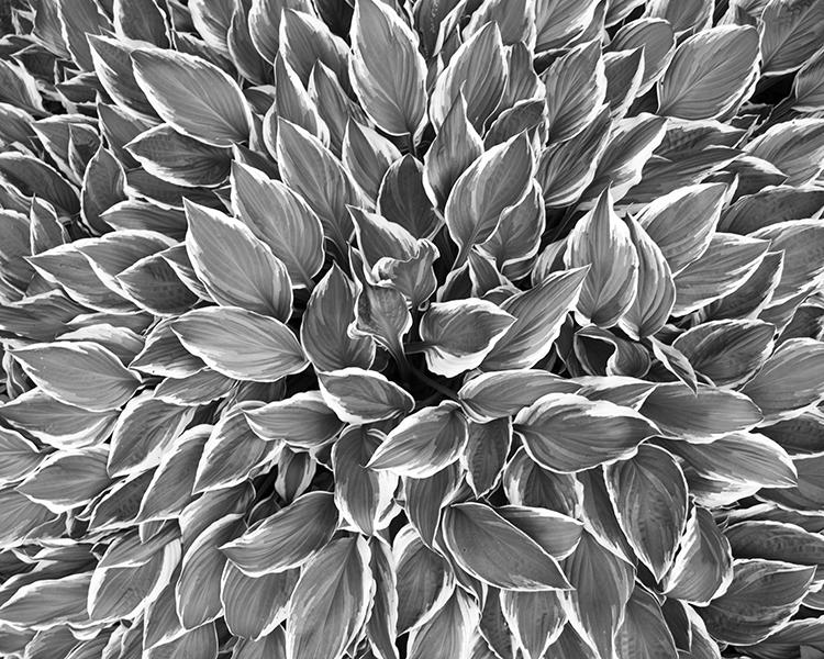 silver garden1.jpg