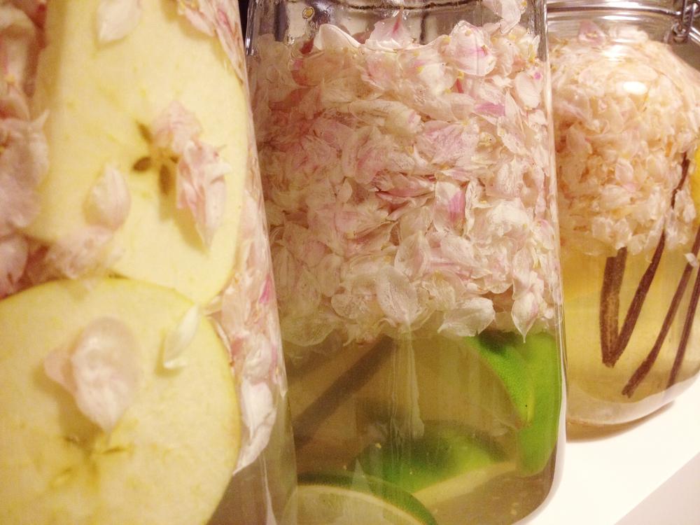 Appelbloesem aan het infuseren