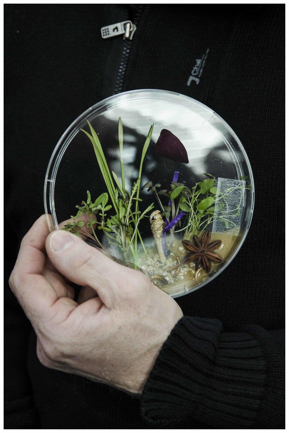 Wollewei voor insectenbar Naturalis. Foto: Nienke Koedijk Beeld