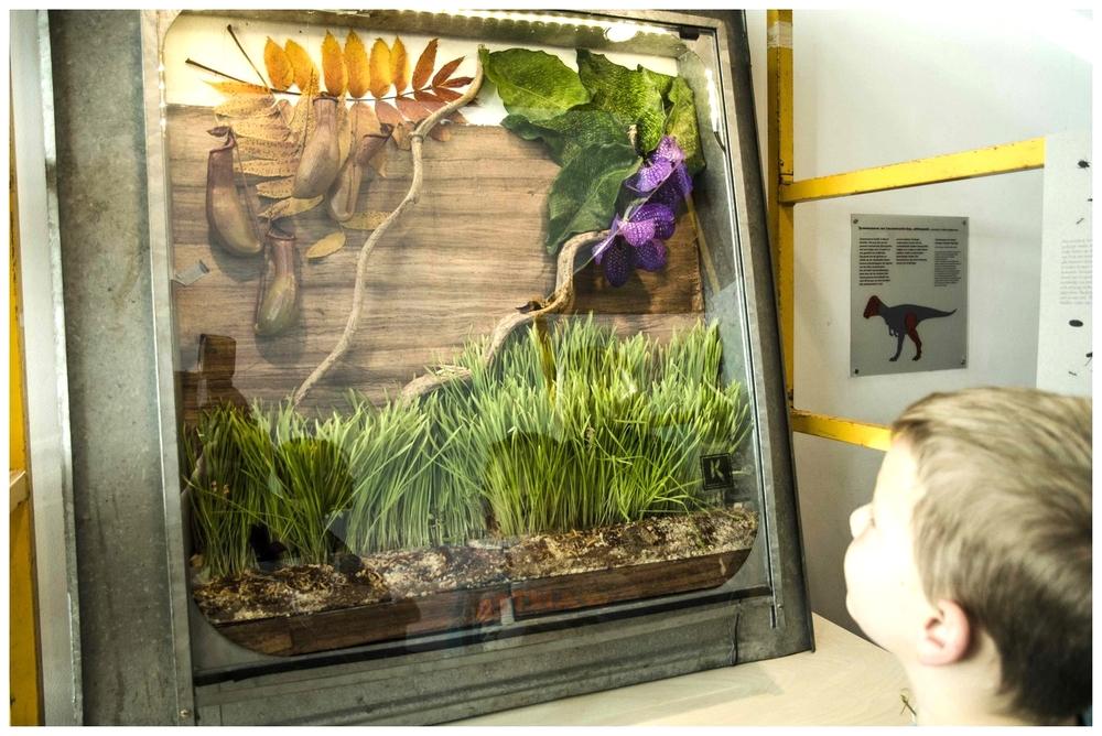 Schilderij De Wollewei, waar Erik in terecht komt tijdens zijn avonturen in de insectenwereld.In ditruimtelijken eetbaar schilderij vind je allerlei insecten en kleine dieren terug in hun oorspronkelijke habitat. Varierend van buffalowormen in de (eetbare) aarde tot een vogelspin tussen de takken en bladeren.
