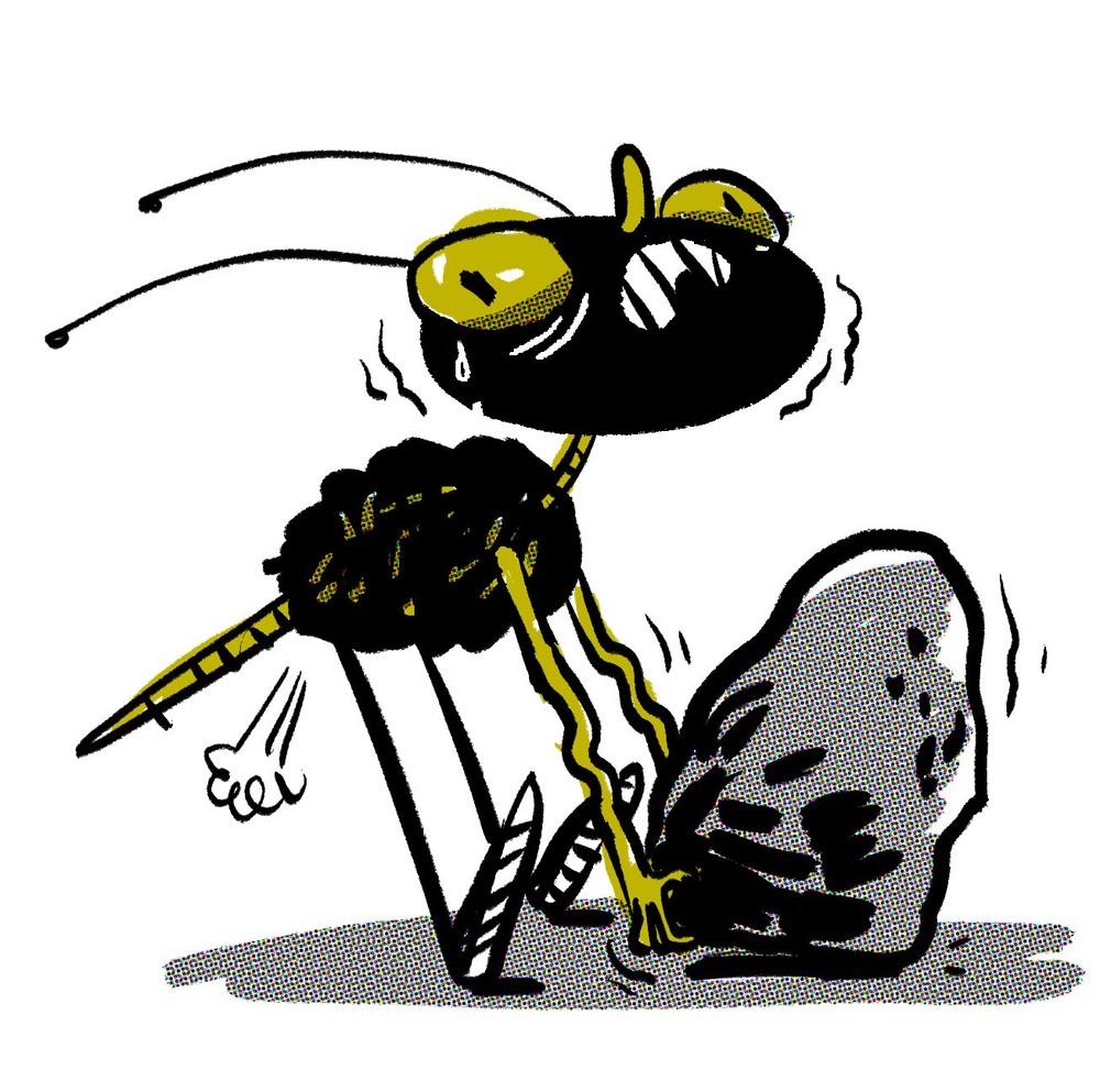 bug13.jpg