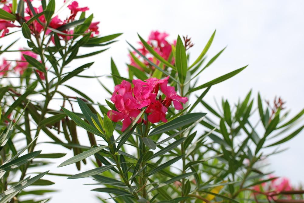 Palmetto Florals