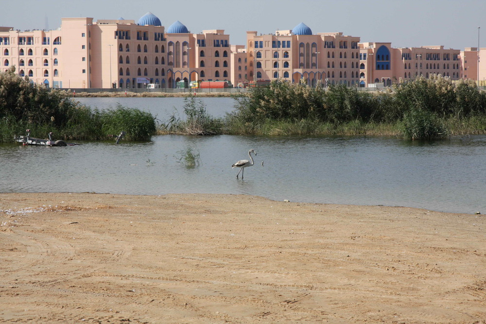 Warsan Lake - Dubai