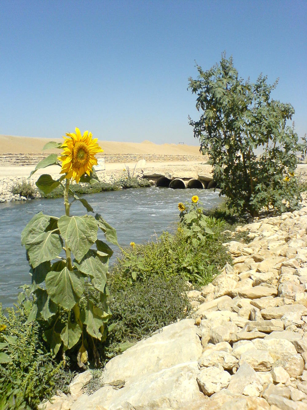Wadi Hanifah Restoration - Riyadh