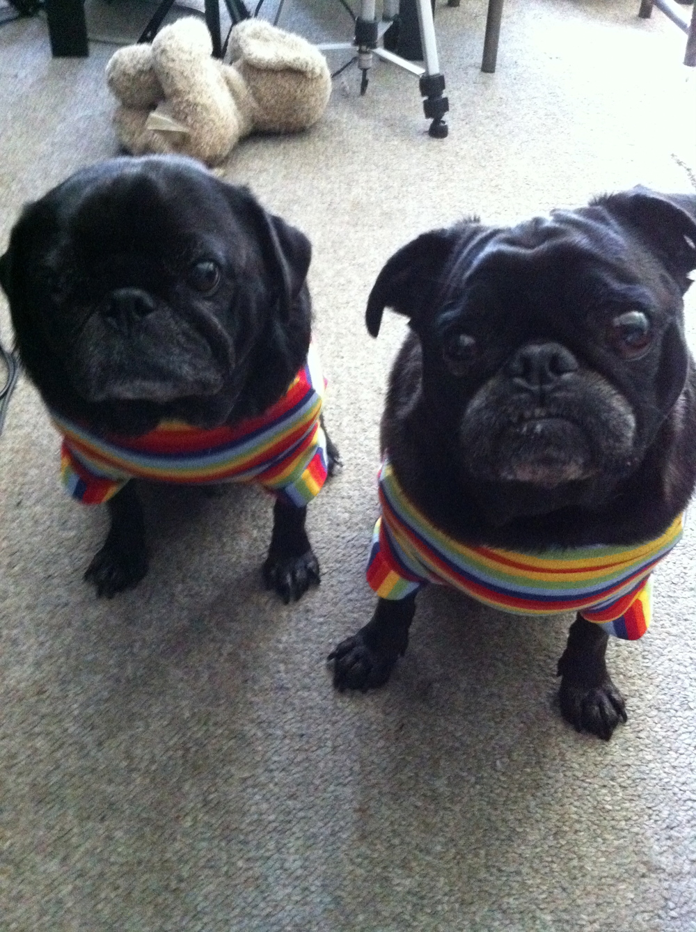 Hummus and Miso in their Pride t-shirts :)