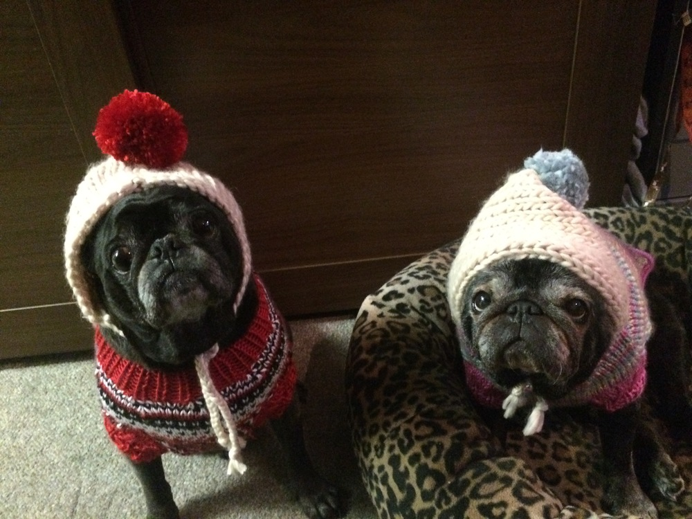 The ridiculous Miso and Leia all bundled up for Christmas!