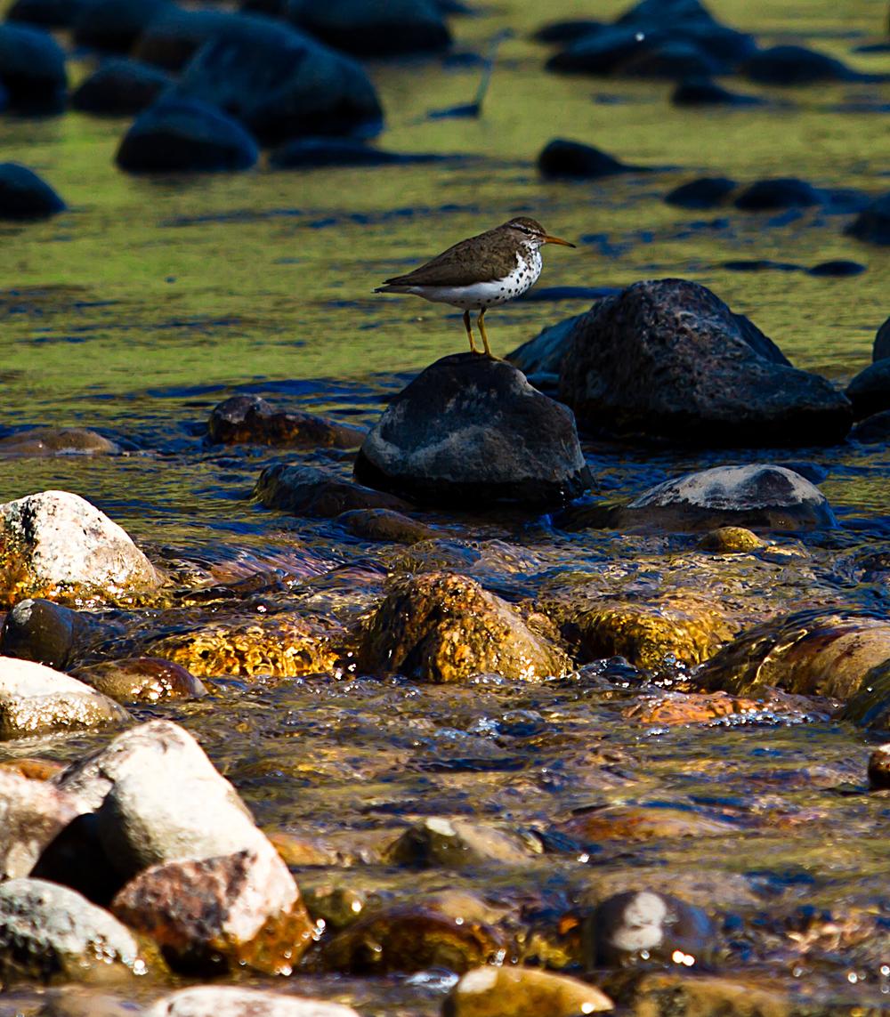 creek1-sm.jpg