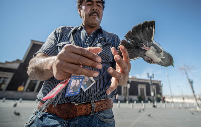 Emiliano Varela releases a pigeon tangled in a piece of rope. Varela works as a portrait photographer in a plaza near the Juárez Cathedral. (Roberto E. Rosales/Albuquerque Journal)