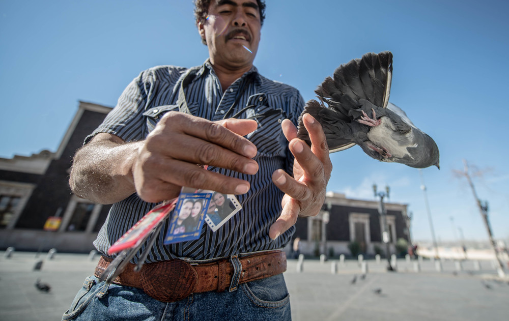 Releasing a pigeon in downtown Ciudad Juarez