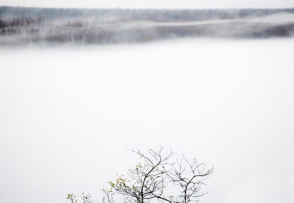 fog_web.jpg