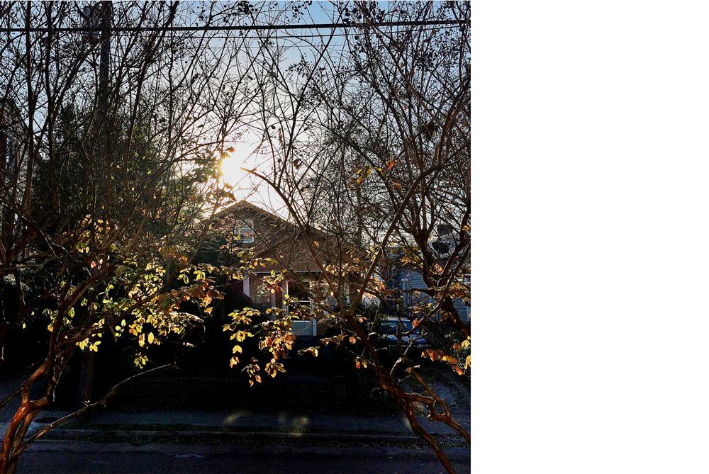 Fall_leaves_acrossstreet.jpg