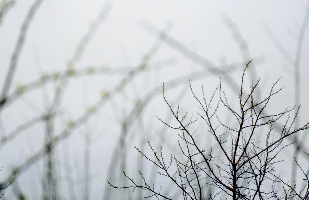 Spring3_web.jpg