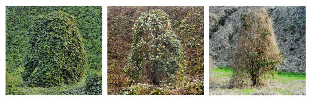 trees_web2.jpg