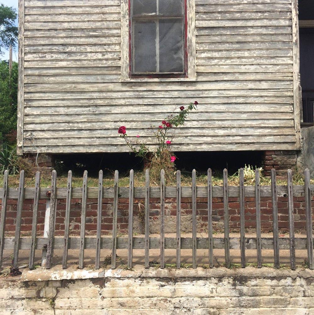 Nellies Roses.jpg