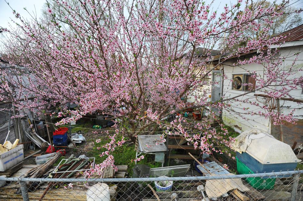 Backyard_flowering_WEB.jpg