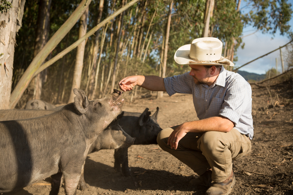 Feeding the pigs, Photo Credit: Jonathan Fong