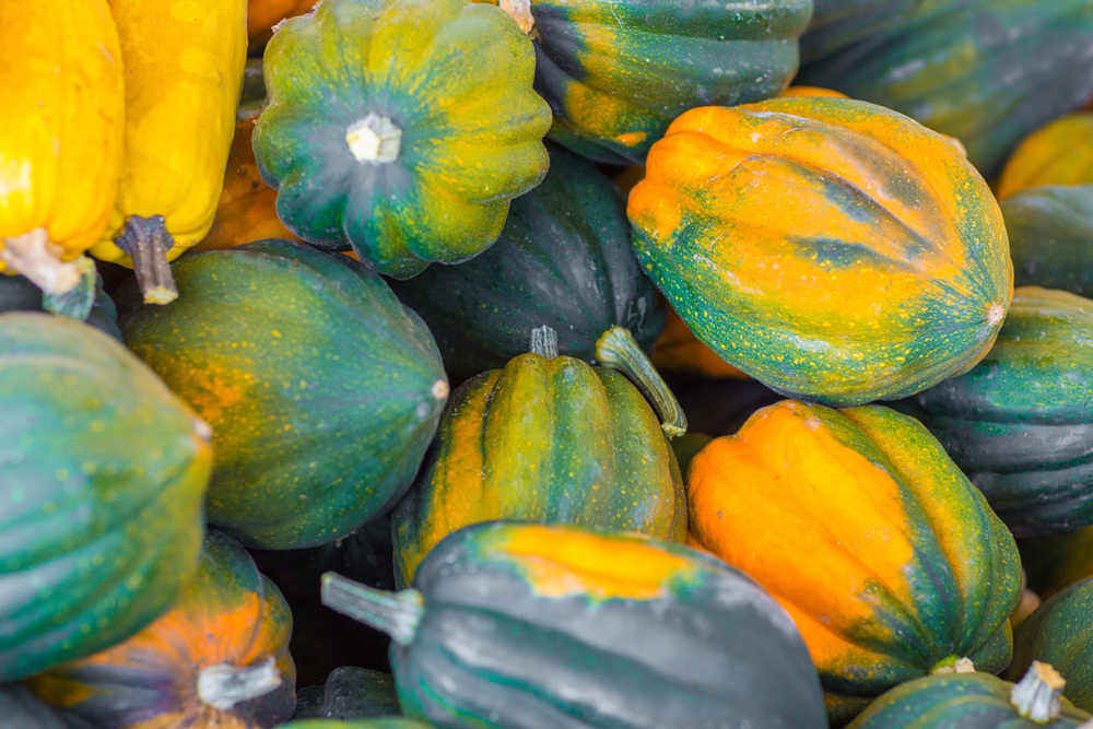 Acorn Squash, Photo Credit: Jonathan Fong
