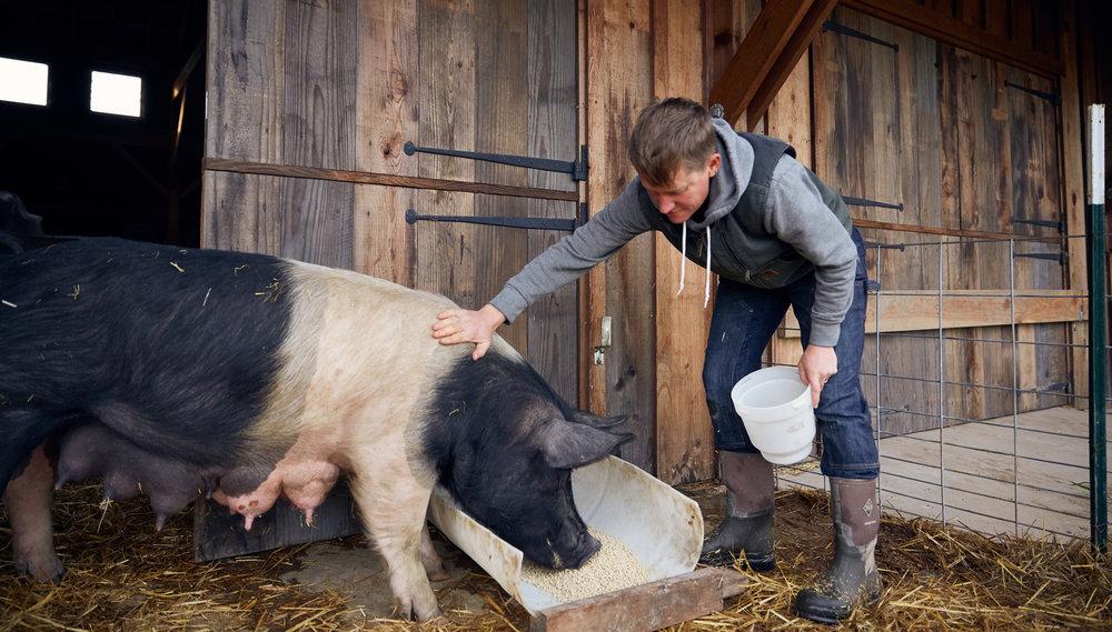 RDF_Appeal-18_5_Dede-Pigs_5.jpg