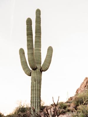 C00714-AZ-Desert-Bridal-Editorial-055-1.jpg