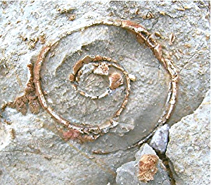 rock spiral.jpg