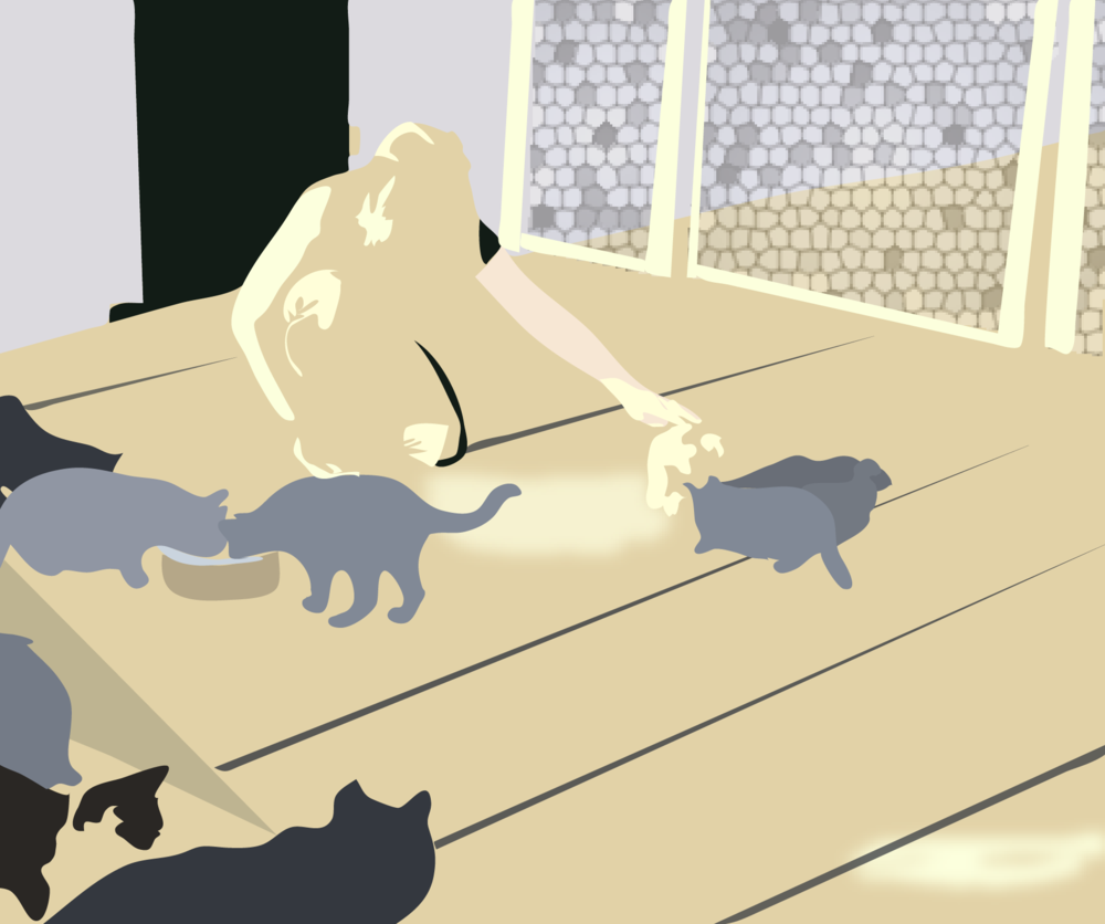 feedingcats3-01.png