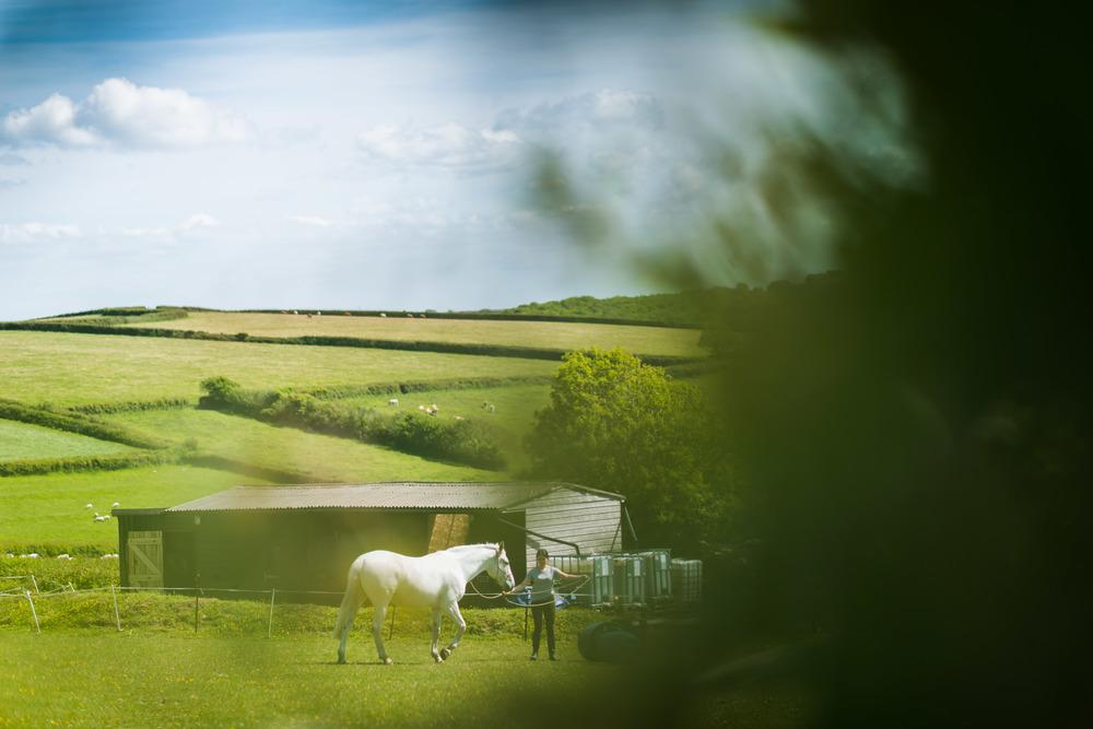 PLP_Horses_JessD_15-12.jpg