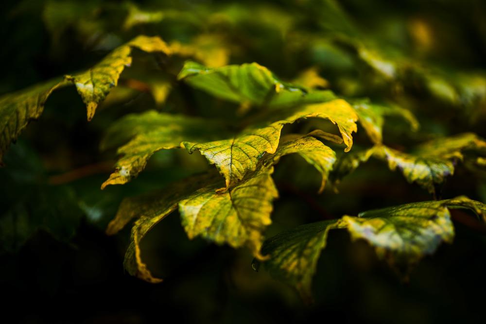 Qtown_Autumn_Leaves_15-1.jpg