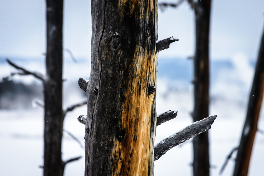 PLP_Yellowstone_2014-2.jpg