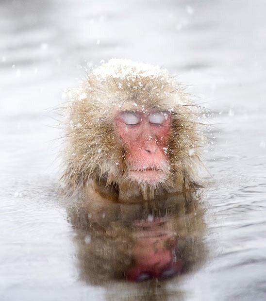 snow monke knows self-care