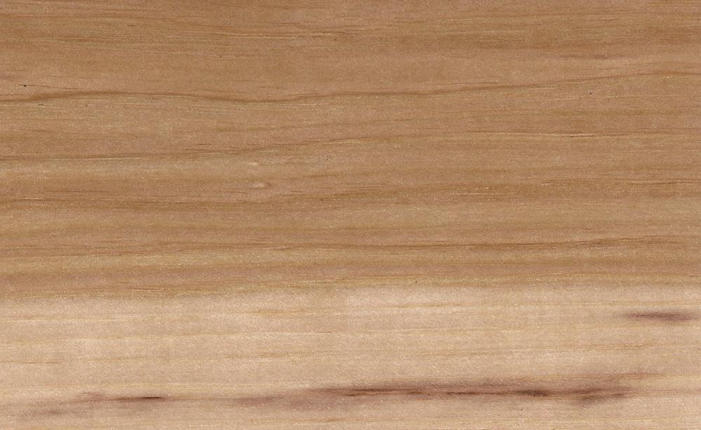hickory pecan.jpg
