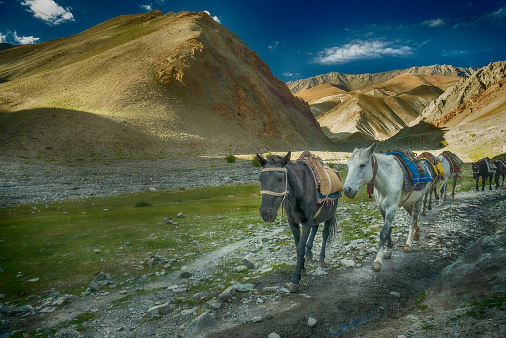 Horses in Ladakh India.jpg