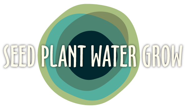 Seed Plant Water Grow