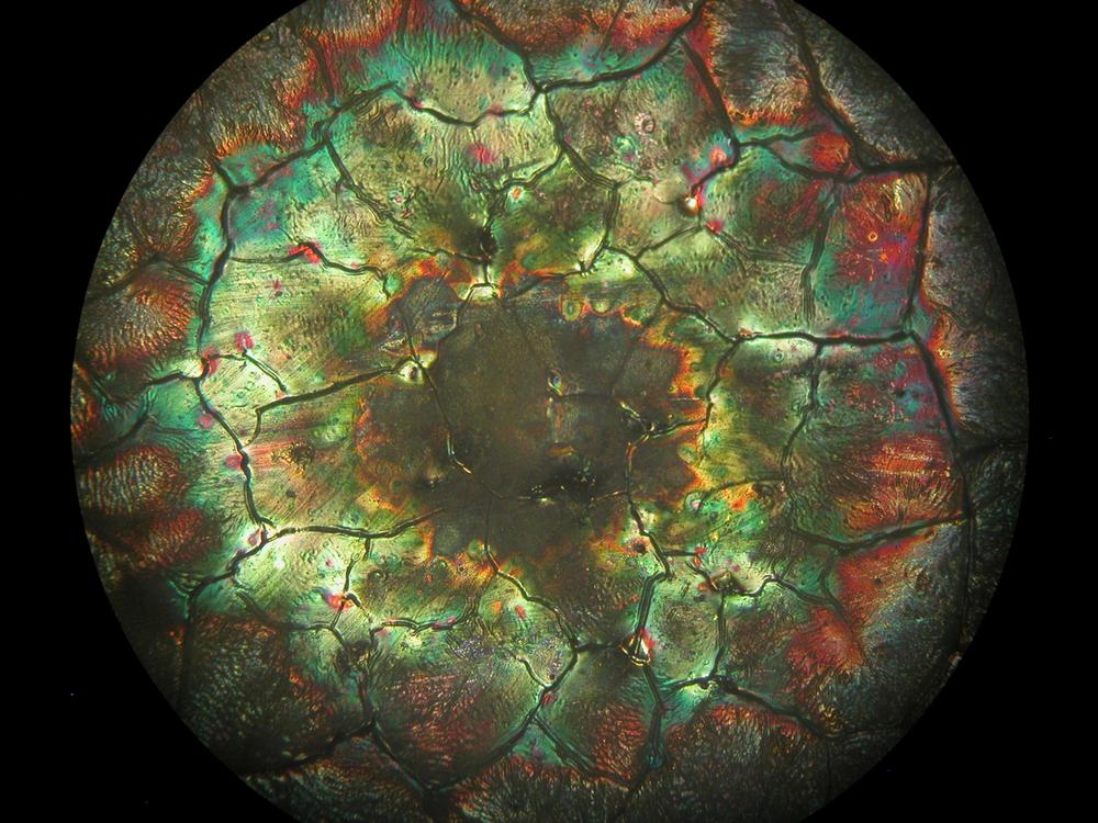 Micropscope-Lustre-4.jpg