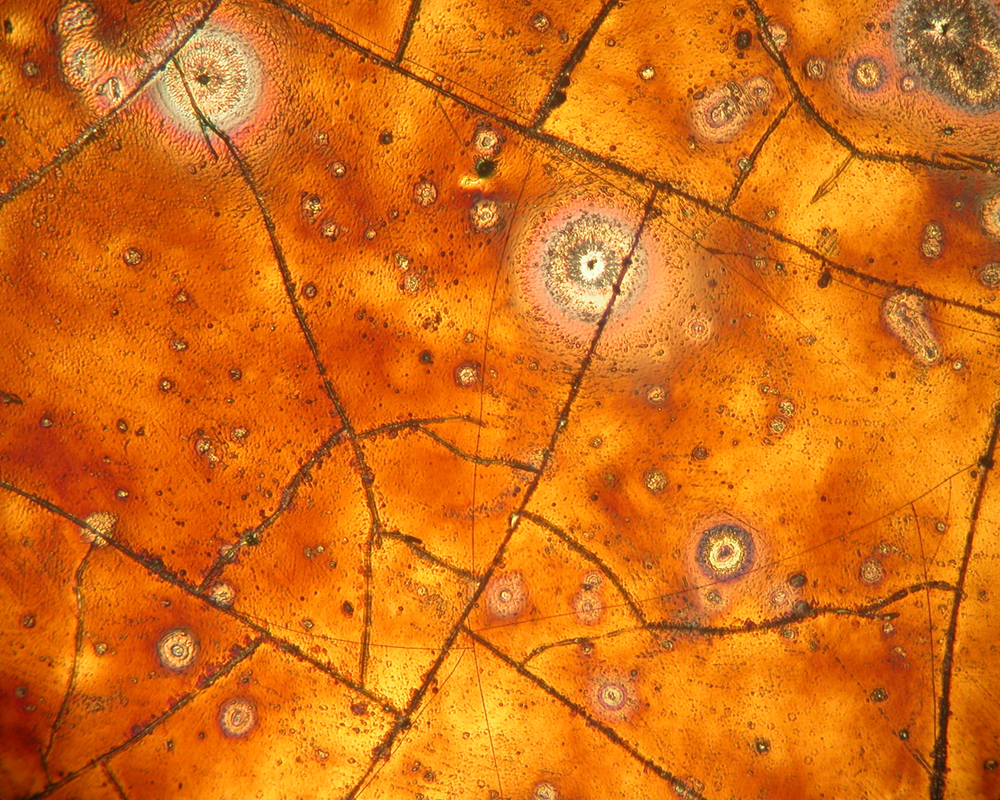 Micropscope-Lustre-17.jpg