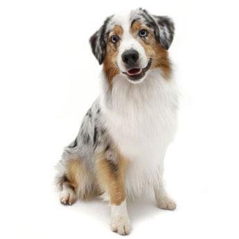 Medium Dogs (11 - 20kg)    $22