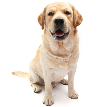 Large Dogs (21 - 40kg)    $23